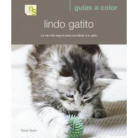 KNS Lindo Gatito