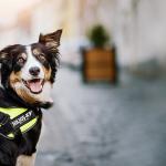 Julius K9, calidad profesional para todo tipo de actividades caninas