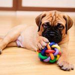 Accesorios para mascotas: perros y gatos