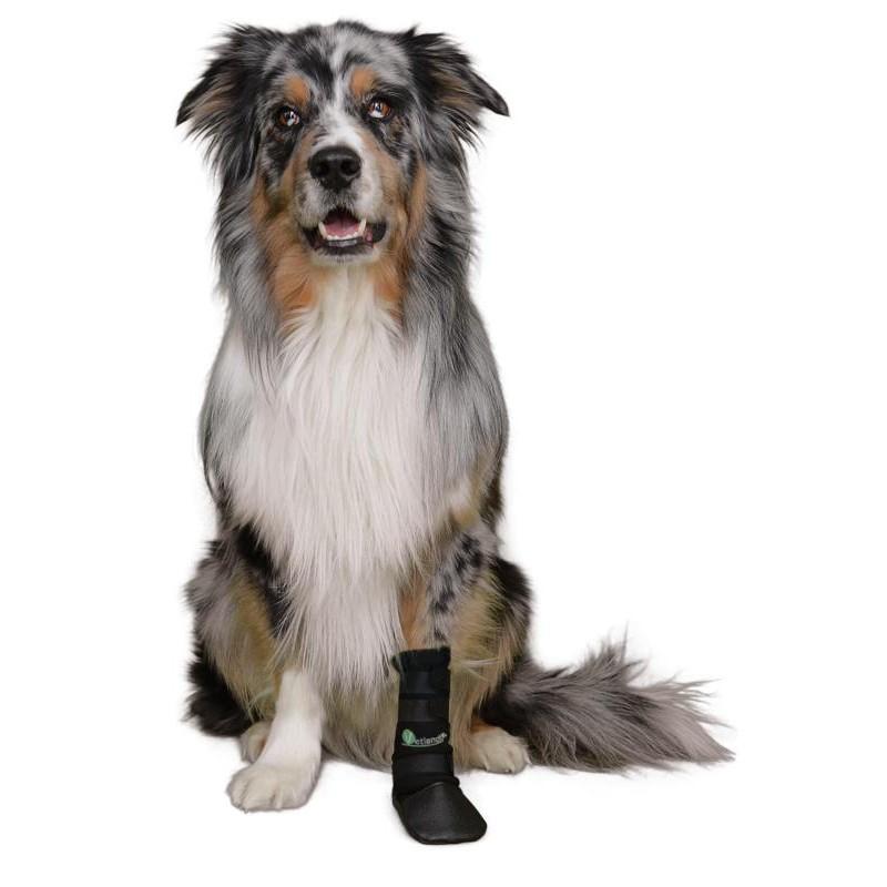 zapato de protección para perro